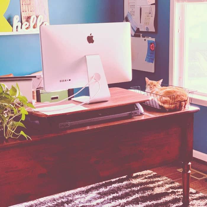 Peanut the cat laying on Jill's desk